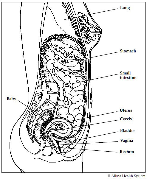 Illustration of pregnant body in first trimester