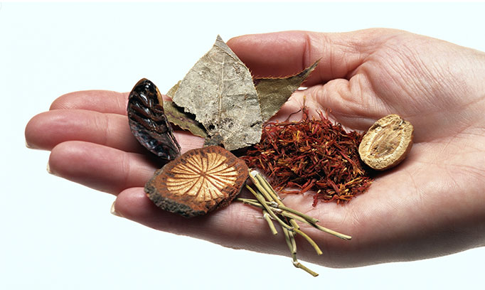Herbs and other foods that are used in Traditional Chinese Medicine