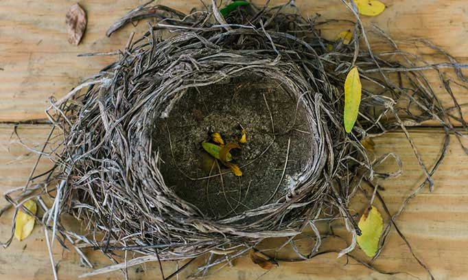 emptynest stocksy medium 365932 682x408