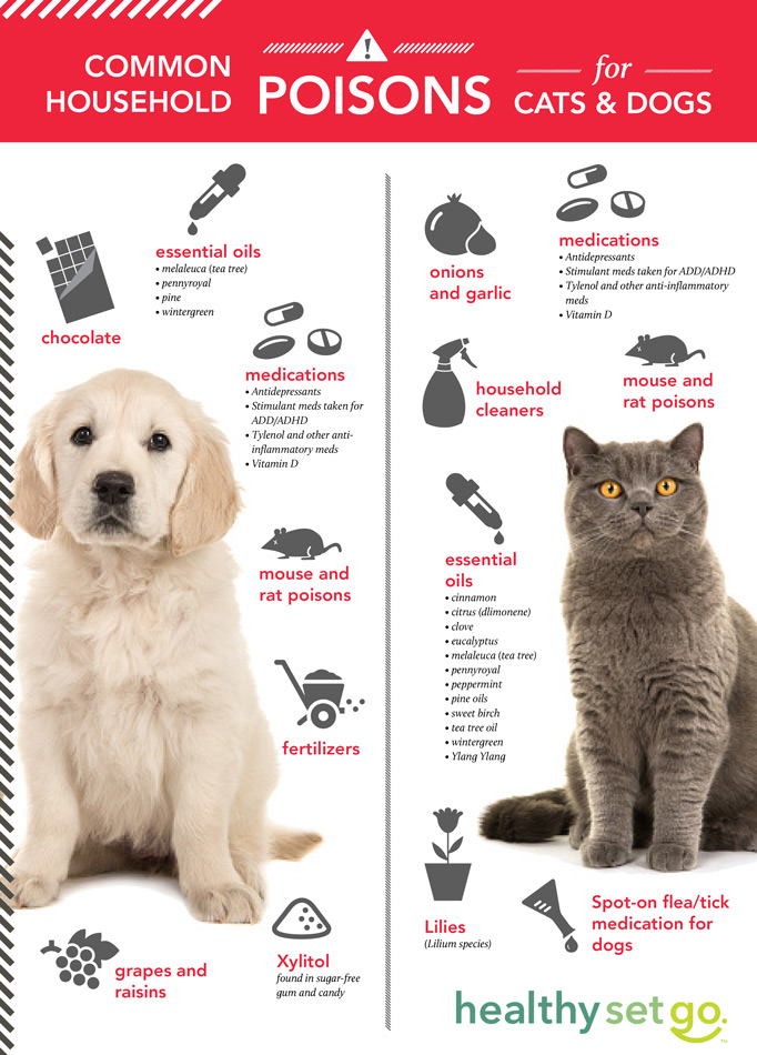 Healthy Pets infographic